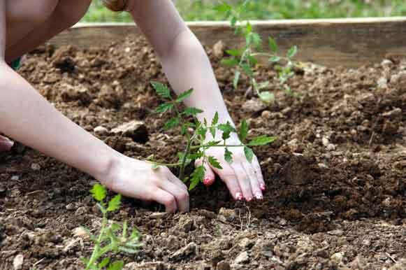 Garden-Hope-Planting